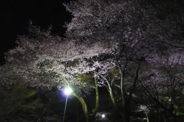 2016-4-2yozakura18-705