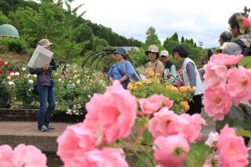 【花の文化園】バラのガイド
