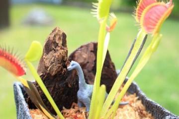 花の文化園 食虫植物を育てよう