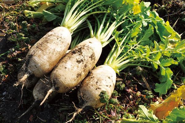 th_野菜