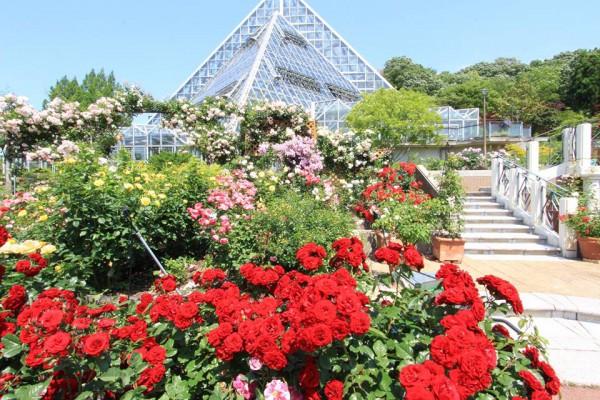 花の文化園3